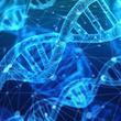 人間の「老化」の指標となる新しい生物時計を発見