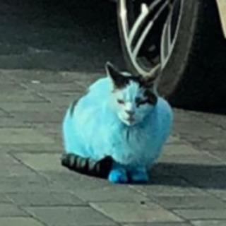 真っ青に染まった猫