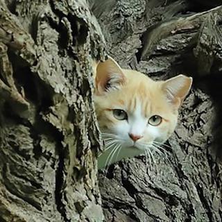 「猫とお墓に入れる寺」