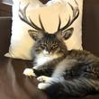 なんか神々しい...! もののけ姫の「シシガミ様」みたいな猫が見つかる