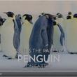 これまた超激レアな黒いコウテイペンギン なんか貫禄あるね