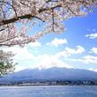千年先も見守るあなただけの御神木の下でお花見をしませんか?富士浅間神社 裏山 桜植樹1000本プロジェクト クラウドファンディング募集開始!