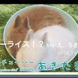 """世界初&日本初の""""0歳ユーチューバー""""が、3月3日""""うさぎの日""""にうさぎ動画を一挙5本公開 ~うさぎ専門店や、うさぎ4コマまんが等を動画で紹介~"""