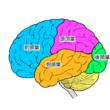 順大ら、遺伝性認知症で起こる脳内異常を解明