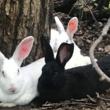 アメリカにもウサギの島がある。ウサギ好きの10代の少年が運営している「ピースバニー・アイランド」