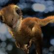 あれれ?ティラノサウルスの赤ちゃんを再現したところモフモフでかわいかった件(米研究)
