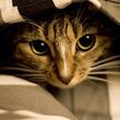 猫は未来や霊が見えてるの?
