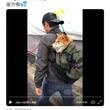 リュックで担がれている柴犬の動画が話題に「お利口にリュックに入ってますね」「運ばれーヌ」