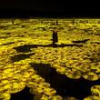 チームラボ、広州(中国)で大規模な展覧会「teamLab: Forest of Life & Future Park」を開催。2019年4月27日(土)~10月7日(月)