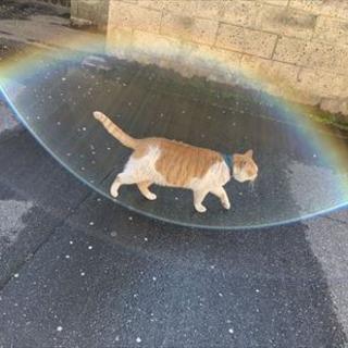 神々しい猫さん