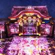 京都・二条城を光の演出が彩る「二条城桜まつり」が開催中