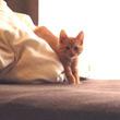 「可愛すぎ!」子猫を呼んだら、スローモーションみたいにゆっくりと近づいて来た!