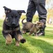 人懐っこすぎて使役犬には向いていない犬の為の里親縁組プログラムが開始される(アメリカ運輸保安局)