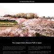 何もないはずの埼玉にこんな名所があるだと!? 全長20kmの桜回廊をドローン撮影した動画が絶景! あまりにも絶景ですぞ~!