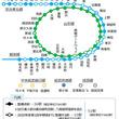 山手線・京浜東北線などのホームドア、新たに15駅で使用開始時期が決定 JR東日本