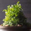 健康志向のあなたへ朗報。6種類の野菜をふんだんに使った「春爛漫てんこ盛り野菜モツ鍋」~酒の席でもからだ想いの居酒屋~