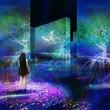 チームラボ、中国・北京の国際園芸博覧会で展示。豊かで美しいマングローブのミクロの世界と、来場者を一体にする。2019年4月29日(火)オープン