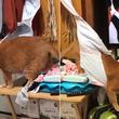 にゃんとも抜けない!猫が巨大なアレの洗濯物に引っかかってしまった件