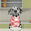安心安全で犬も喜ぶフード「Bucth(ブッチ)」をご紹介!