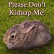 ウサギの巣を見つけたらするべきこと。春のウサギシーズンに備えよう!