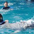 イルカと泳げる大人気のトレーナー体験にチャレンジ!小学校5・6年生限定の職業体験プログラム「ジュニアトレーナー」開催 実施期間:2019年6月8日(土)~7月7日(日)の土・日10日間