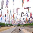 大阪・高槻の空を優雅に泳ぐ、鮮やかな約1000匹の「こいのぼり」たち