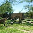 カブトムシ教室や動物クイズラリーなど盛りだくさん!高知県立のいち動物公園のGWイベント