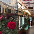 東京都交通局、今年も「都電バラ号」を運行