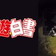 「幽☆遊☆白書」新作エピソード&劇場版、dTVで独占先行配信