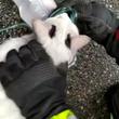 火事で煙吸った猫、消防士が酸素マスクで救命 トリノで