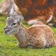 癒し度120パーセント!かわいすぎる動物の赤ちゃんに会いに、富士サファリパークへ!!