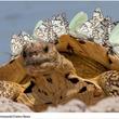 カメの甲羅に蝶が止まるとステゴサウルスに変身してしまう
