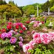 金蛇水神社 花まつり 5月8日~5月21日
