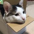 猫がダンボール箱と出会ったら…? すっぽり収まりくつろいでいく表情に「いい顔してるわ」「俺の家まで配達してくれ!」