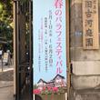 [バラ]イベントレポート:春のバラフェステバル@旧古川庭園|バラ科バラ属