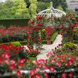 ヒミツの花園、お見せします!3万輪のバラが咲き誇る、屋上庭園へようこそ!