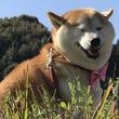 「自宅の敷地が犬のフンまみれに。隣人の常軌を逸した嫌がらせ、もう我慢できません」(島根県・30代性別不明)