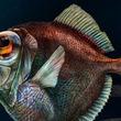 深海魚は真っ暗な海底でも「色が見える」スーパーアイを持っていた