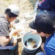 磯の生き物を採集して水族館に展示できる!和歌山県白浜水族館で磯採集体験開催