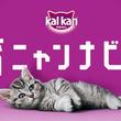 カルカン(R)が初めて子猫を飼い始める「子猫育てビギナー」を応援!「子猫育て」を音声でサポートするアプリ「育ニャンナビ」リリース