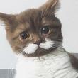 名探偵ポワロみたい!口ひげのあるフランスの子猫