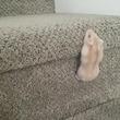 階段をよじ登ろうと頑張るハムスターがキュートすぎる!