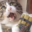 この顔芸には誰も敵わニャイ。名俳優顔負けの表情を見せる猫