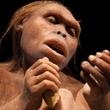 【世界の不思議】人はどのように進化した?「ダーウィンの進化論」はどこまでが本当なのか?