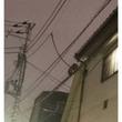 """「アライグマか? 狸か? UMAか?」 ノッチ、夜の電線を駆ける""""謎の生命体""""の撮影に成功"""
