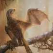 コウモリっぽい新種の恐竜の化石が中国で発見される ちょっとカワイイ?