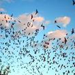 仲間同士で妨害音波を出しまくって仲間を混乱させるコウモリがいる
