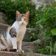 ビックリ!琴欧洲の出身地だった猫の町