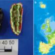 1万年前の「ガム」がスカンジナビア半島で発見! 起源や交流が明らかに