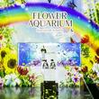 【マクセル アクアパーク品川】「ペンギンパフォーマンス」×「プロジェクションマッピング」の融合プログラム。梅雨シーズン限定プログラム「てるてるペンギン」【2019年6月1日(土)~7月7日(日)】